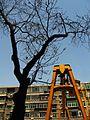 Tree and lift lattice 大树和起重机桁架 - panoramio.jpg