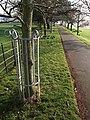 Tree guards, Torre Abbey Meadows - geograph.org.uk - 1175884.jpg