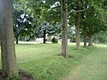 Tree lined avenue, Winwick - geograph.org.uk - 879214.jpg