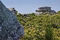 Tuscan Islands - Elba - mountains near Madonna del Monte - Mufflon.jpg
