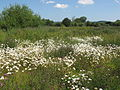 Two River Meadow 8.JPG
