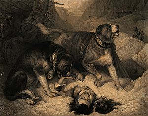 John Landseer - Two St. Bernard dogs with an avalanche victim, one tries to revive him while the other alerts the rescue party. Line engraving by J. Landseer, 1831, after E. Landseer.