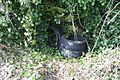 Tyres in the hedge - geograph.org.uk - 1206474.jpg