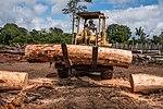 USAID Measuring Impact Conservation Enterprise Retrospective (Guatemala; Rainforest Alliance) (39407121755).jpg
