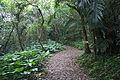 Ufu-daki Kohamajima Okinawa Japan04s3s4592.jpg
