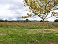 Ulster American Folk-park - geograph.org.uk - 543828.jpg