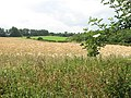 Undulating farmland north of Kirby Bedon - geograph.org.uk - 1388395.jpg