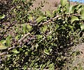 Unidentified desert plant (48338423407).jpg