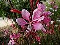Unidentified flower in yard 6.jpg
