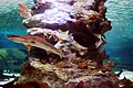 Unknown fishes in the Antalya Aquarium 19.jpg