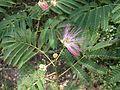 Unknown type of bloom.jpg