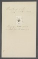 Urceolaria valga - - Print - Iconographia Zoologica - Special Collections University of Amsterdam - UBAINV0274 113 21 0017.tif