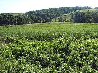 Uryupinsky District - Landscape in Uryupinsky District
