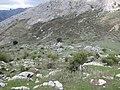 Vaguada entre los tajos (7232292128).jpg