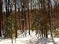Valley Trail - Flickr - treegrow (2).jpg