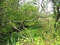 Valley near Cae-gwyn - geograph.org.uk - 1294949.jpg