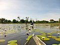 Varen in een Mokoro door de Okovango Delta (6558960711).jpg