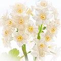 Vase of spring daffodils (12874708903).jpg