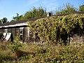 Verlassenes und bewachsenes Gebäude - panoramio.jpg