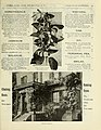 Vick's garden and floral guide (15943051903).jpg