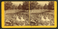 View near the Waumbek House, Jefferson, N.H, from Robert N. Dennis collection of stereoscopic views.png