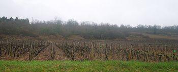 Vignoble de Saint-Aubin 5.JPG