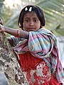 Village Girl in Tree - Sundarbans District - South of Kolkata - India (12355532965).jpg