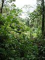 Virunga National Park-119507.jpg