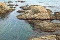 Vivier maritime de la Gaillarde à Roquebrune-sur-Argens le 10 février 2017 - 11.jpg
