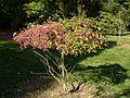 Von Gimborn Arboretum 4.jpg