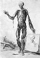 W. Cowper, Myotomia reformata Wellcome L0024323.jpg