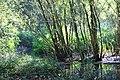 Wachtspaarbekken Bettelhovebeek 02.jpg