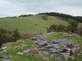 Waitomo Sheep - Flickr - Teacher Traveler.jpg