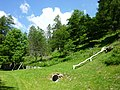 Waldreservat Plontabuora8.jpg