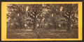 Walker plantation, Port Royal Island, S.C, from Robert N. Dennis collection of stereoscopic views.png