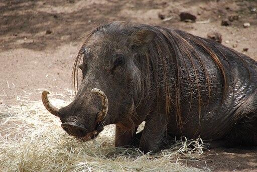 Warthog 06-13