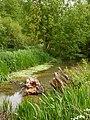 Water meadows - geograph.org.uk - 1292469.jpg