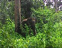 Wayanad wildlife sanctuary.jpg