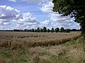 Wheat field and tree line - geograph.org.uk - 923293.jpg