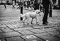 White dog walk in richmond (Unsplash).jpg