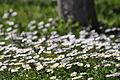 White field!.JPG