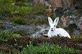 White rabbit on grass (Unsplash).jpg