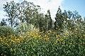 Wild flowers in a forest near Olgino 2020-09-13-4.jpg