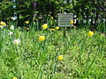 Wildflower garden at Orrell Park railway station.jpg