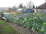 File:Winter allotments - geograph.org.uk - 663672.jpg