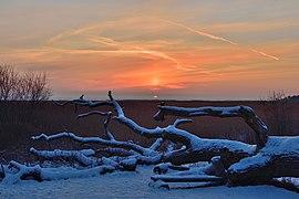 Winter sunset on the coast of the Neva Bay.jpg
