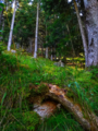 Wood in Val Venosta in Italy photo by Giovanni Ussi (27).webp