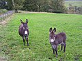 You're a Donkey^ - geograph.org.uk - 263532.jpg