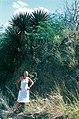 Yucca declinata fh 0398 MEX Indra B.jpg