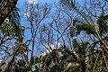 Zone dégradée en reconstitution dans la forêt de la Lama au Bénin.jpg